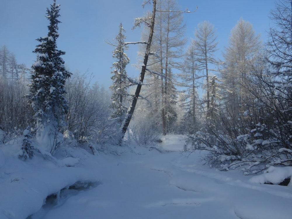 Zimowa tajga